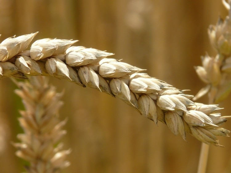 5 Best Seed Treatment Methods for Soybean and Wheat