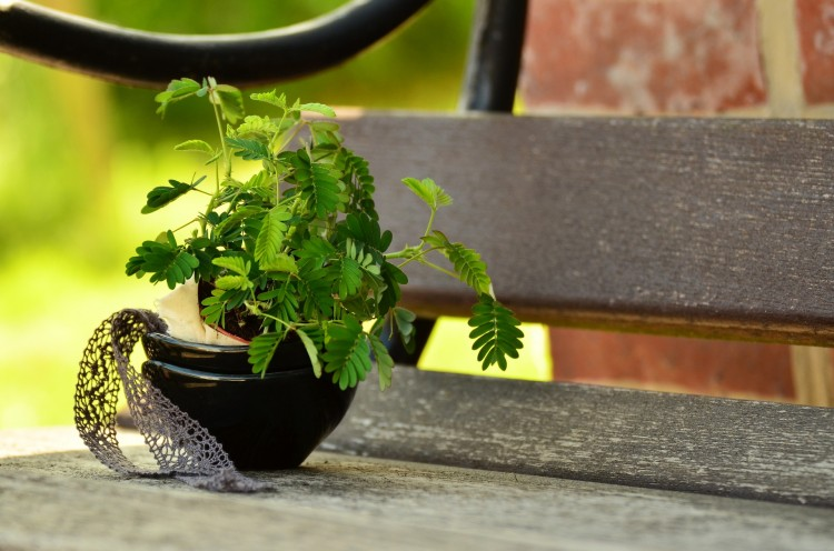Easiest Indoor Plants to Grow From Seed