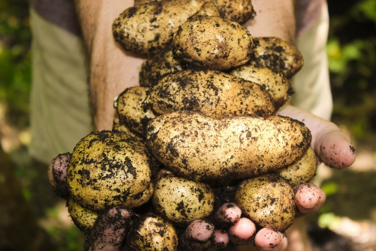 10 Most Profitable Crops to Grow on a Small Farm
